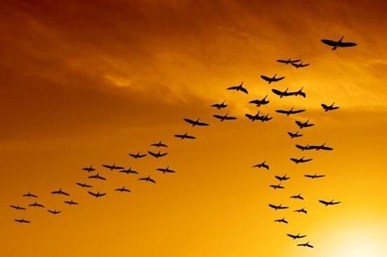Radio kỳ 322:  Những cánh chim không mỏi