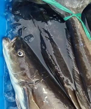 Đầu cá bóp