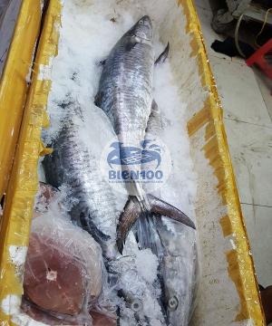 Cá Thu khoanh