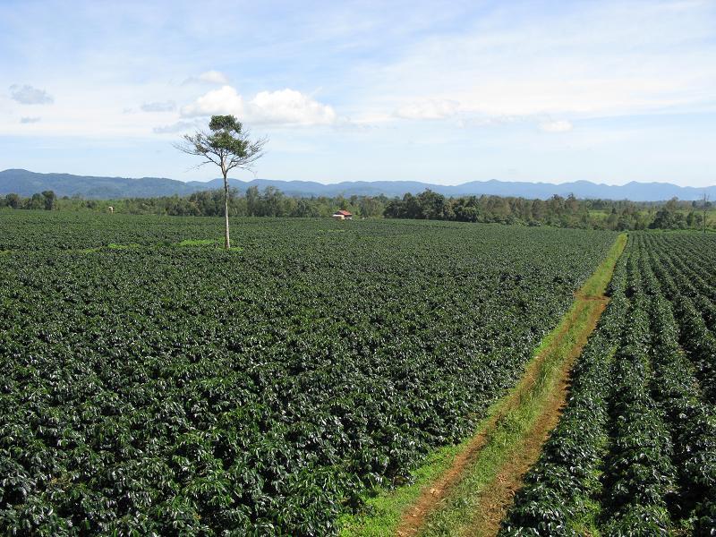 Khảo sát mùa vụ cà phê Việt Nam, nước ngoài họ đã làm như thế nào?