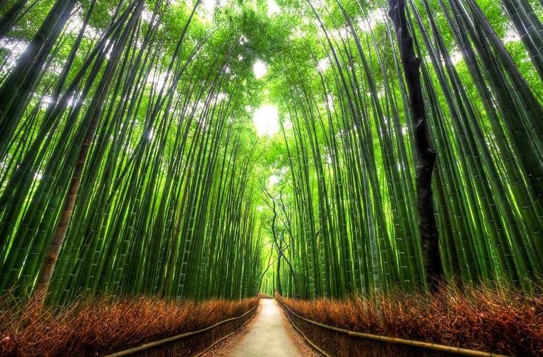 7 điểm đến hấp dẫn bậc nhất Nhật Bản