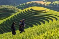Hà Nội - Ninh Bình - Hạ Long - Yên Tử -  Sa Pa 6N5Đ - Thứ 5