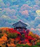 SEOUL - NAMI - EVERLAND [5N4Đ-TẶNG FANTASTICK SHOW]