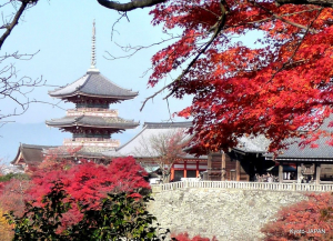 [DU LỊCH NHẬT BẢN] KHÁM PHÁ CUNG ĐƯỜNG VÀNG OSAKA - NAGOYA - KYOTO - KOBE - FUJI - TOKYO