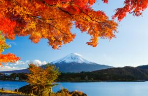 [DU LỊCH NHẬT BẢN] KHÁM PHÁ MÙA THU LÁ ĐỎ NHẬT BẢN TOKYO - KAWAGUCHIKO - FUJI