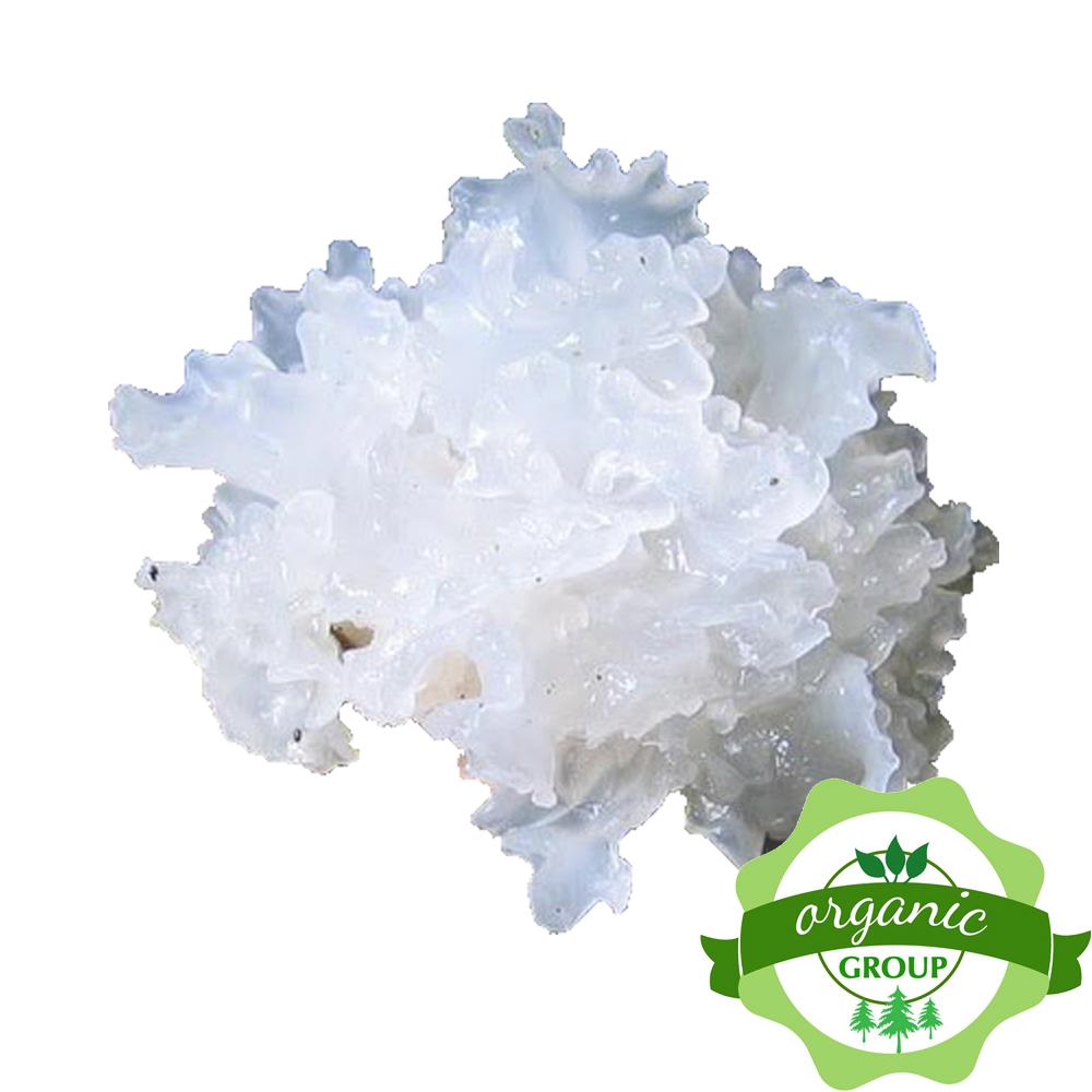 Mọc nhĩ trắng khô Bắc Kan Organic