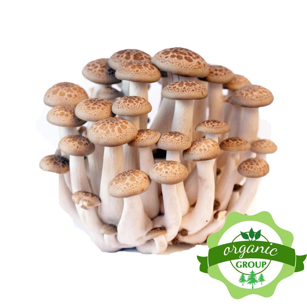 Nấm sò nâu Organic