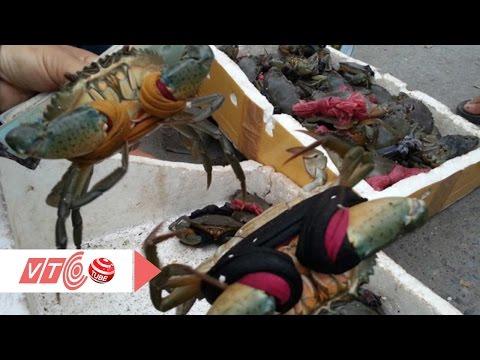 Cảnh báo cua biển Cà Mau giá 30.000 đồng | VTC
