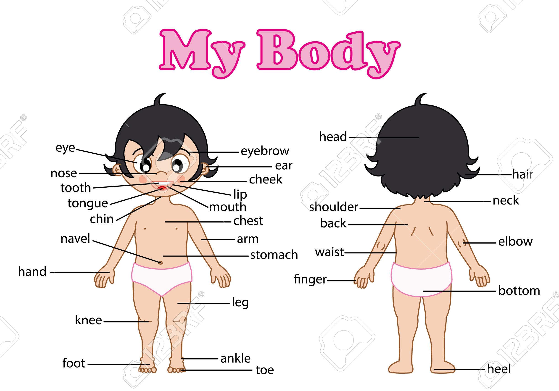"""THÀNH NGỮ TIẾNG ANH VỚI """"BODY"""" PART 2"""