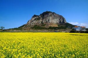 Seoul - Jeju - Nami - Everland - 6N