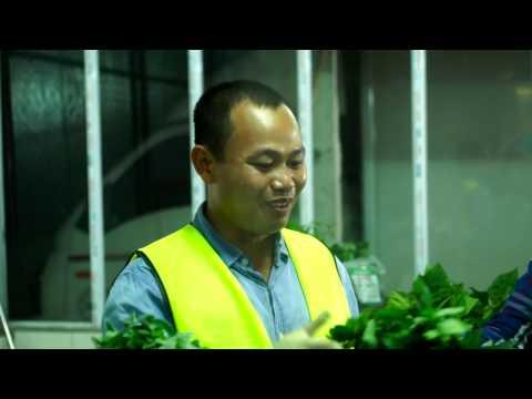 Nông Nghiệp Sạch số 5 - Rau Sạch Yên Lạc